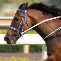 Horse Racing Stopwatches